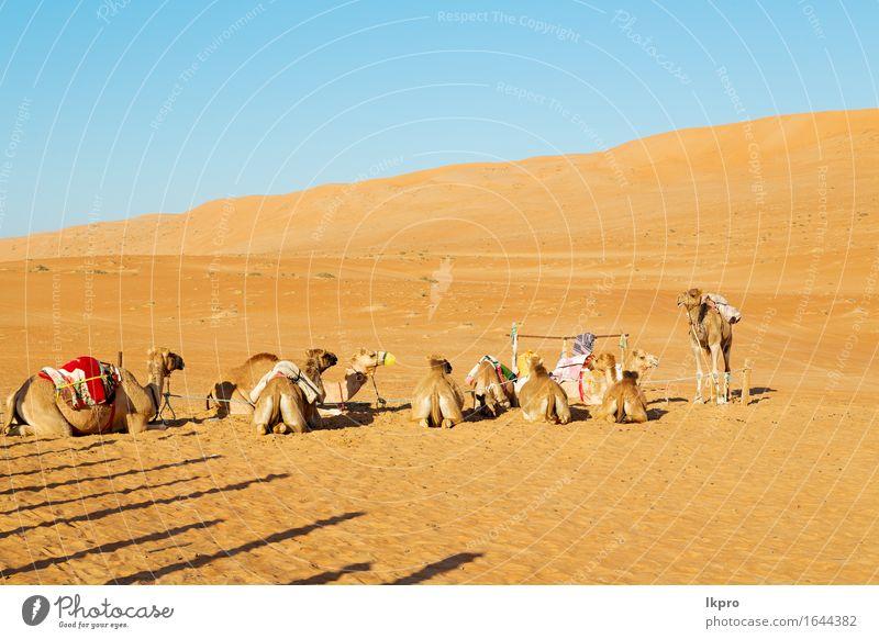 leeres Viertel der Wüste ein freies Gesicht Ferien & Urlaub & Reisen Tourismus Abenteuer Safari Sommer Natur Tier Sand Himmel Wolken Verkehr heiß wild braun