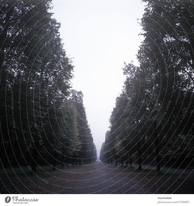 V alt Einsamkeit Wald Erholung Landschaft Herbst Wege & Pfade Traurigkeit träumen Kunst Park Angst warten nass wandern ästhetisch