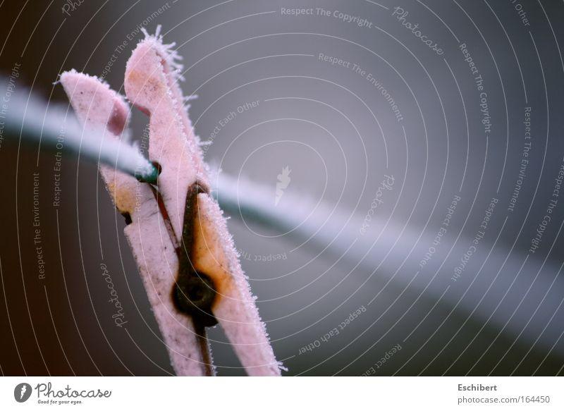 Winterstarre Farbfoto Außenaufnahme abstrakt Menschenleer Textfreiraum rechts Textfreiraum oben Hintergrund neutral Tag Kontrast Schwache Tiefenschärfe