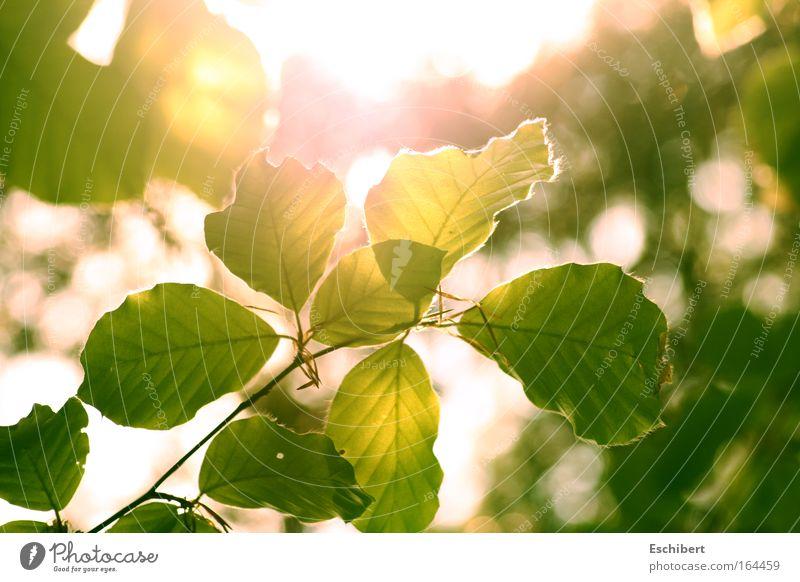 Erwachen Natur Pflanze grün Sonne Erholung Blatt ruhig Freude Wärme Frühling Gefühle Freiheit Stimmung Zufriedenheit Fröhlichkeit Schönes Wetter