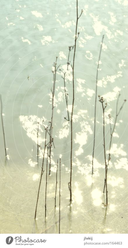 waterworld Gedeckte Farben Außenaufnahme Experiment Menschenleer Tag Licht Reflexion & Spiegelung Langzeitbelichtung Ausflug Wellen Natur Pflanze Wasser