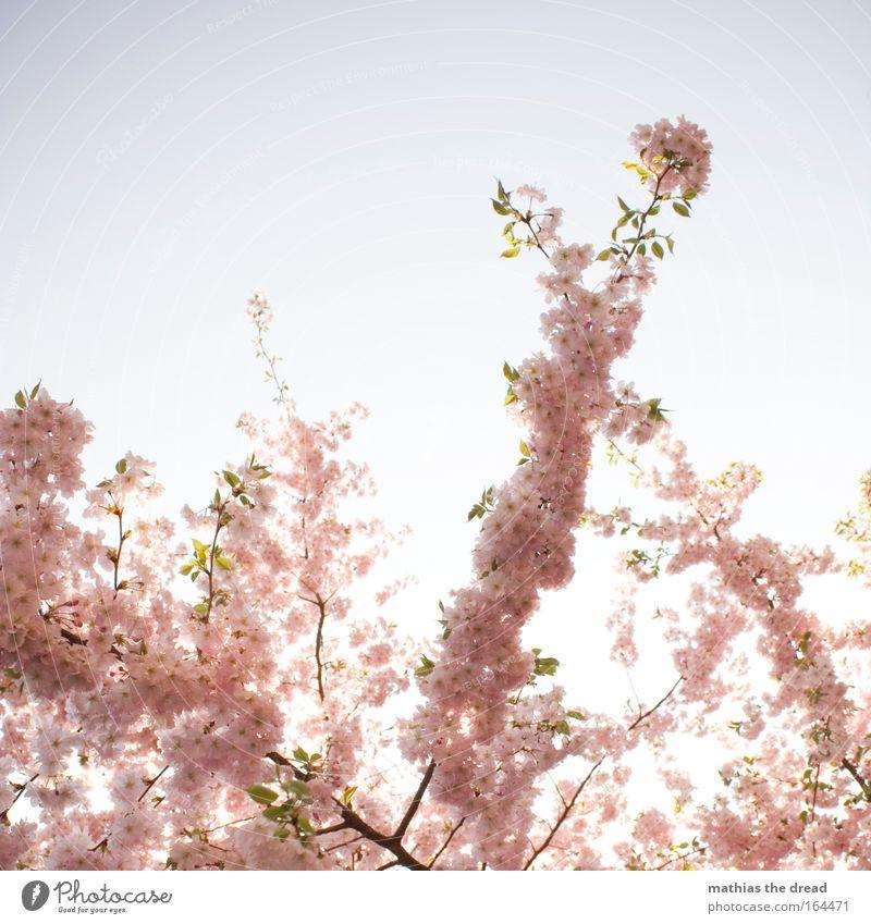 BLÜTENSTAND Farbfoto Außenaufnahme Detailaufnahme Menschenleer Textfreiraum oben Hintergrund neutral Tag Licht Sonnenlicht Sonnenstrahlen Gegenlicht
