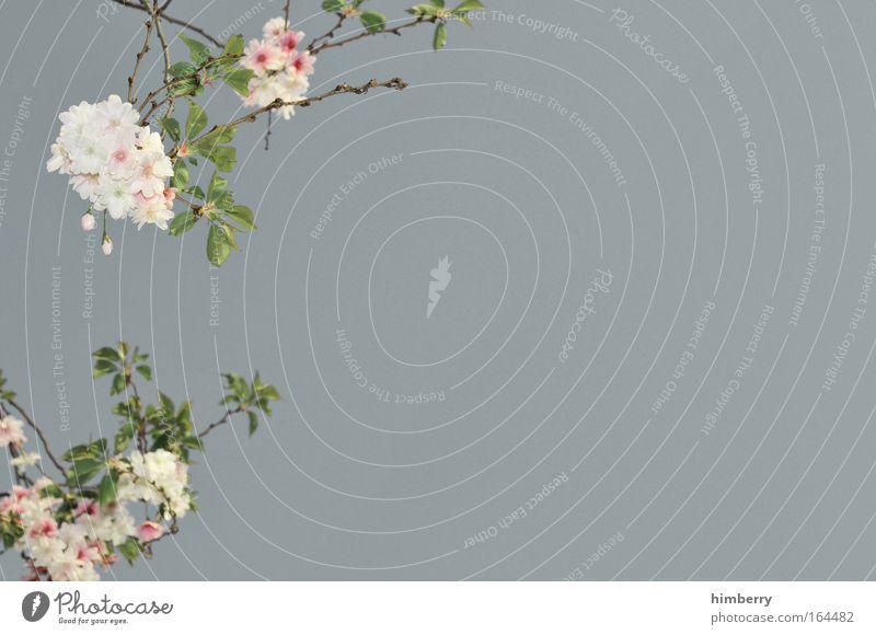 spring on silver Natur Pflanze schön Sommer Erholung Blume ruhig Umwelt Leben Frühling Stil grau rosa Park frisch ästhetisch