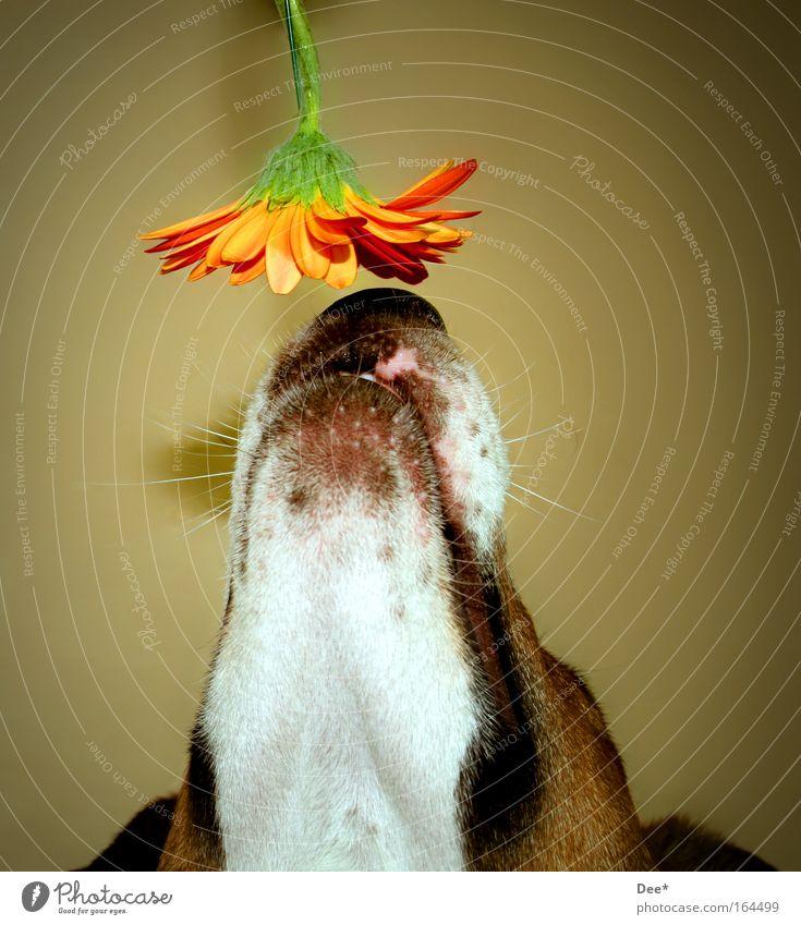 mmmmmh lecker... Blume Tier Blüte Hund Tiergesicht Neugier Duft Haustier Interesse