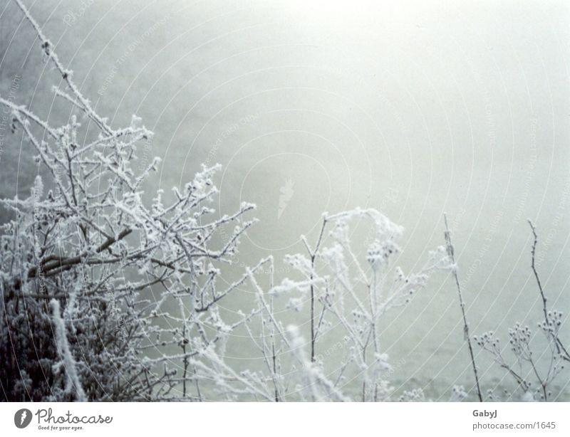 Winterimpressionen 2 weiß ruhig kalt Eis Nebel Ast Schneelandschaft Schnellzug Raureif
