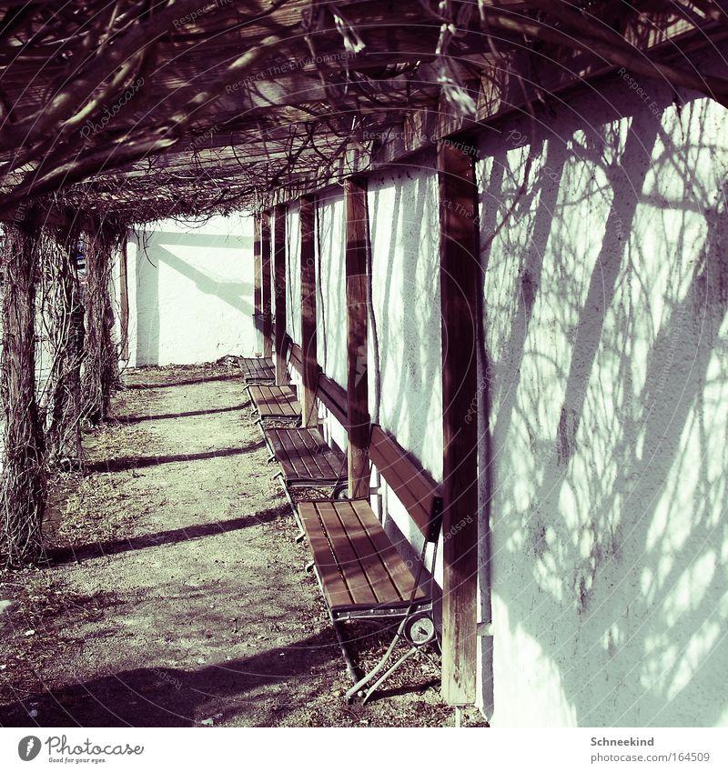 Wrong Turn Natur blau weiß Baum Sonne ruhig Erholung Landschaft Herbst kalt Wand Holz Sand Garten Mauer Park