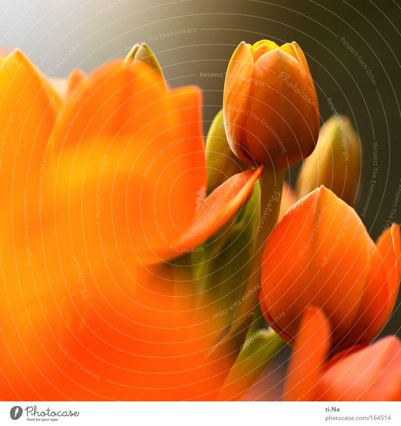 Blumenname unbekannt Natur schön Pflanze ruhig Blüte ästhetisch Wachstum Dekoration & Verzierung Blühend Duft Umwelt Gärtner Blumenhändler Nahaufnahme