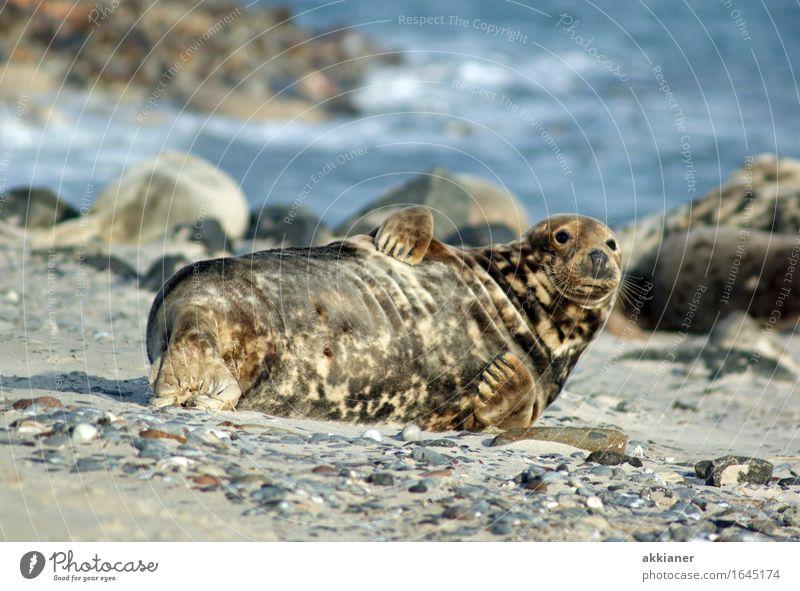 """Robbe Tier Wildtier """"Seehund Seehunde lion sea lion seal seals Seelöwe Seelöwen Robben Säuger Säugetier Tiere Tierreich tierisch Tierwelt"""" 1 Abenteuer"""