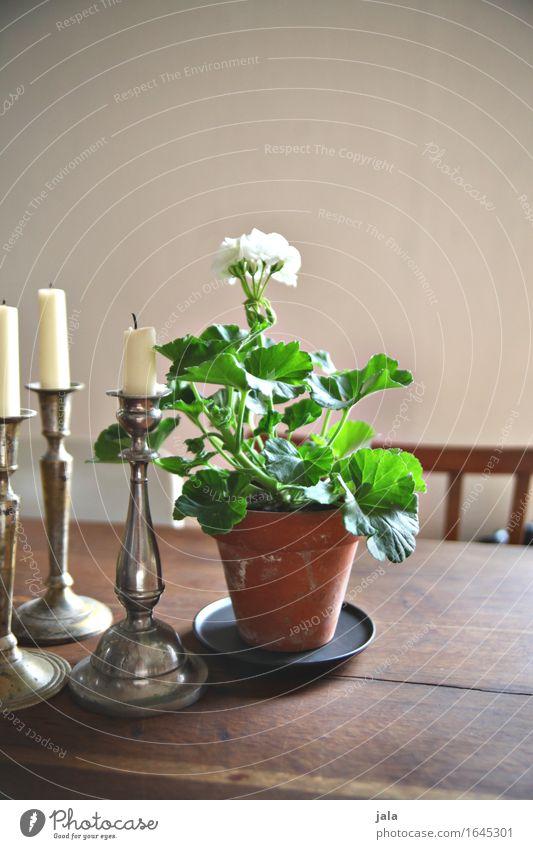 geranie Häusliches Leben Wohnung Dekoration & Verzierung Tisch Pflanze Blume Topfpflanze Kerze ästhetisch Pelargonie Farbfoto Innenaufnahme Menschenleer