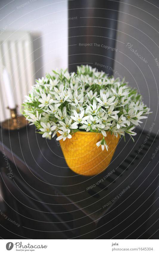 Gärtnertod Pflanze schön Blume Blüte wild Häusliches Leben Dekoration & Verzierung Blumenstrauß Duft