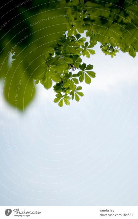 Kastanie Farbfoto Außenaufnahme Detailaufnahme Menschenleer Textfreiraum unten Textfreiraum Mitte Hintergrund neutral Starke Tiefenschärfe Froschperspektive