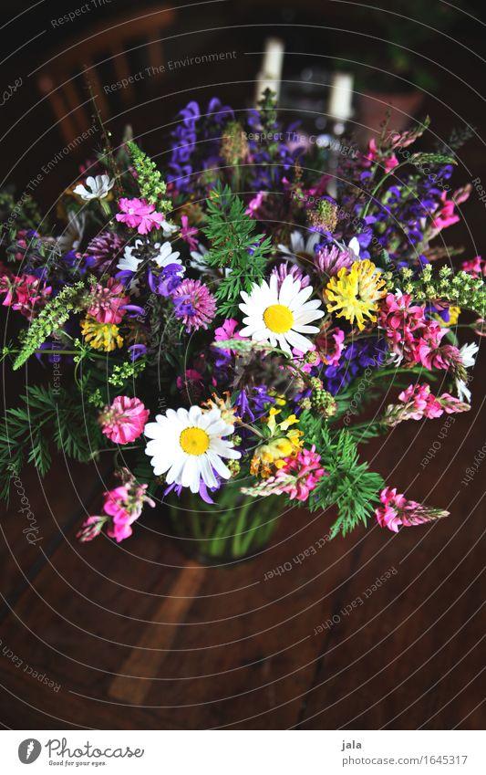 wild thing Natur Pflanze schön Blume natürlich Häusliches Leben frisch Tisch einfach Blumenstrauß Frühlingsgefühle