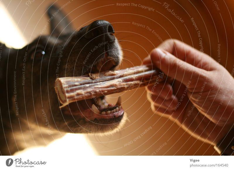 Leckerli Hand Tier Hund Hundefutter Futter Tiergesicht Haustier Sympathie diszipliniert Tierliebe Mensch gefräßig