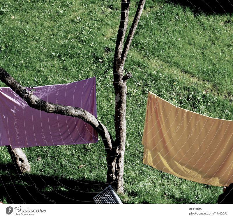Waschtag Natur Baum grün Sommer gelb Wiese Garten violett Häusliches Leben Arbeit & Erwerbstätigkeit Gartenarbeit
