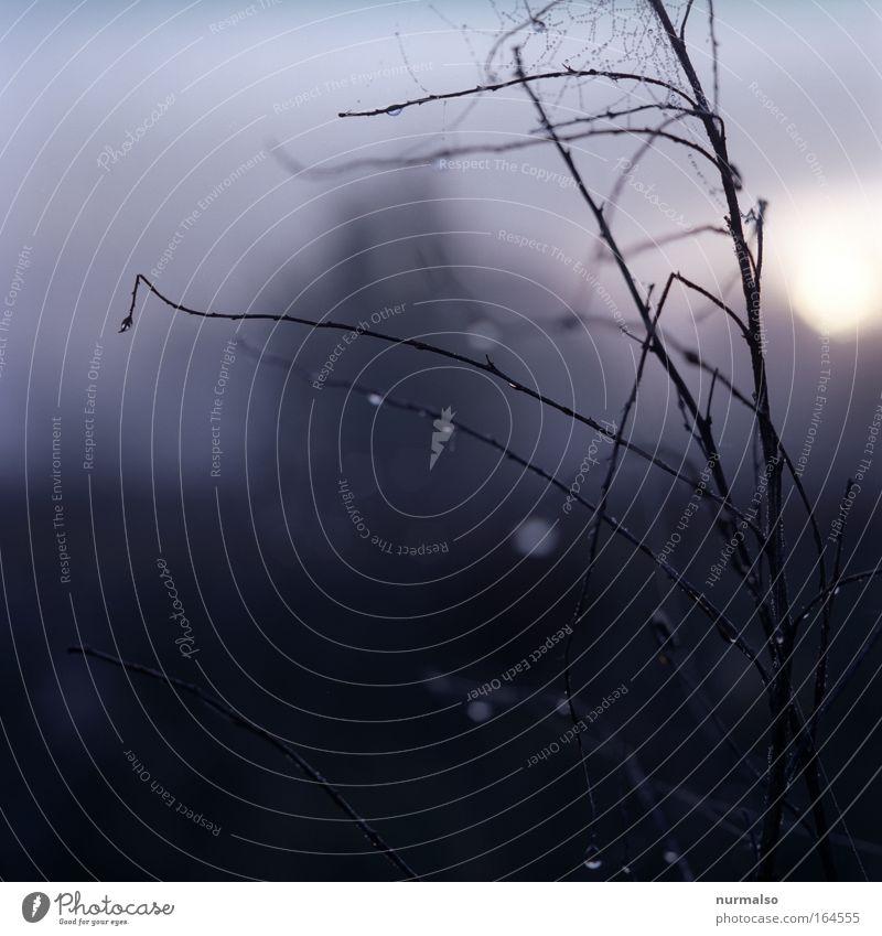 Morgen davor Natur Wasser schön Ferien & Urlaub & Reisen Landschaft Holz Park Kunst Feld Nebel glänzend wandern außergewöhnlich Dekoration & Verzierung