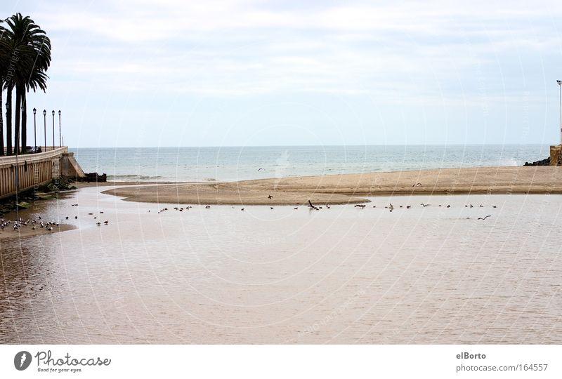 Vogelschwarm an Flussmündung Himmel Natur Ferien & Urlaub & Reisen Sommer Wasser Meer Landschaft Ferne Strand Umwelt Küste Freiheit Sand Horizont Tourismus