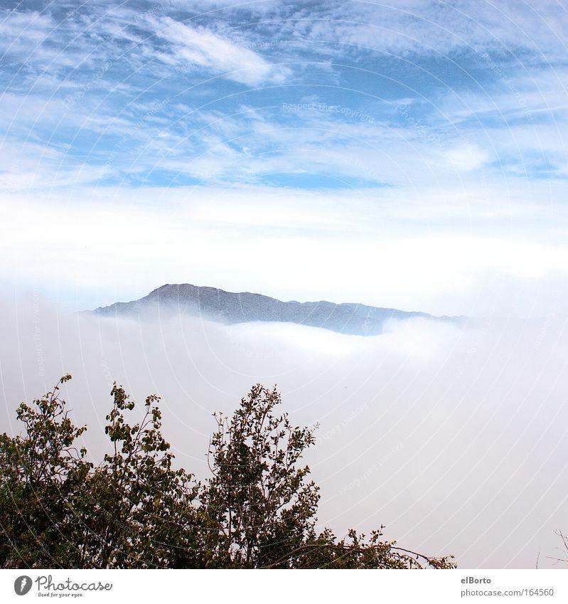 Berggipfel und Wolkental Himmel Natur Ferien & Urlaub & Reisen Einsamkeit Ferne Freiheit Berge u. Gebirge Landschaft Nebel wandern Erfolg Hügel Sehnsucht Gipfel
