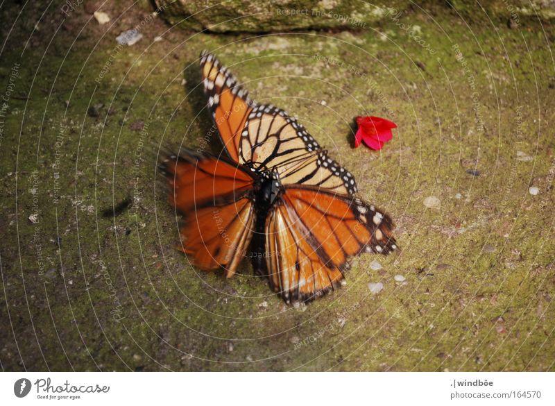 Zu Zweit Farbfoto Nahaufnahme Tag Bewegungsunschärfe Zentralperspektive Blick nach unten Schmetterling Zoo 2 Tier Tierpaar fallen Zusammensein kämpfen
