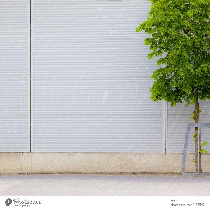 baumsam Farbfoto Außenaufnahme Menschenleer Textfreiraum links Tag Starke Tiefenschärfe Frühling Baum Platz Mauer Wand Beton Holz Metall Wachstum modern braun