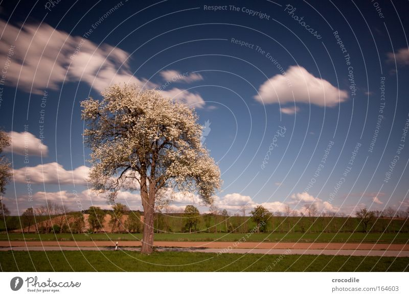Frühlingserwachen II Natur Baum Pflanze Wolken Ferne Straße Wiese Gras Glück Wege & Pfade Landschaft Luft Zufriedenheit Feld Umwelt