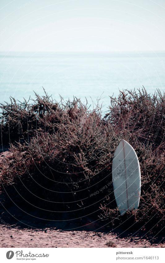 hingeschmissen Ferien & Urlaub & Reisen Sommer Strand Umwelt ästhetisch Sommerurlaub Surfen Surfer Surfbrett Urlaubsfoto Urlaubsstimmung Strandleben Surfschule