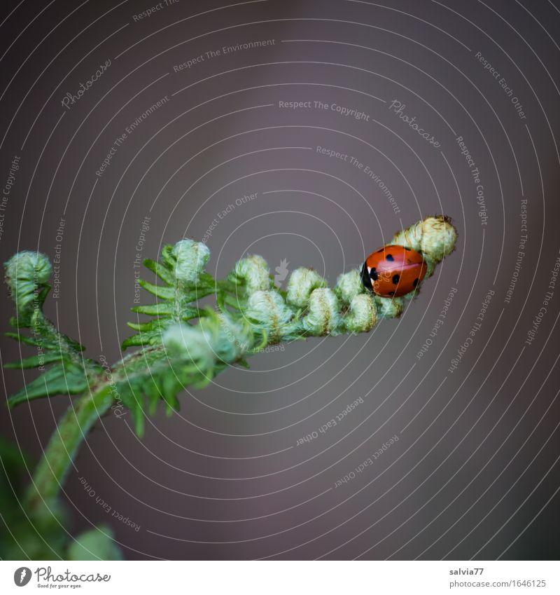 Spitzenplatz Natur Pflanze grün schön Blatt Tier ruhig Frühling natürlich klein Glück grau Wildtier Idylle Insekt Leichtigkeit