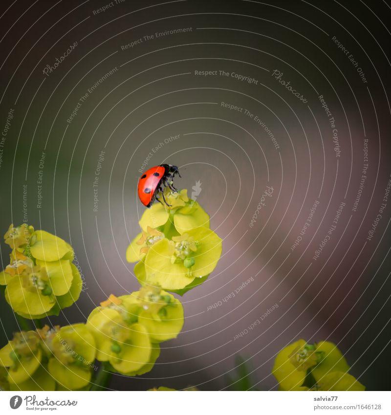 oben, und nun? Natur Pflanze Tier Umwelt Blüte Frühling Wege & Pfade Bewegung klein Glück frei Wildtier ästhetisch Perspektive Lebensfreude