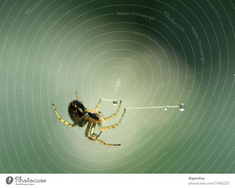 Wahrsagerin grün Tier Zufriedenheit Angst ästhetisch Leichtigkeit hängen Tau Ekel Spinne
