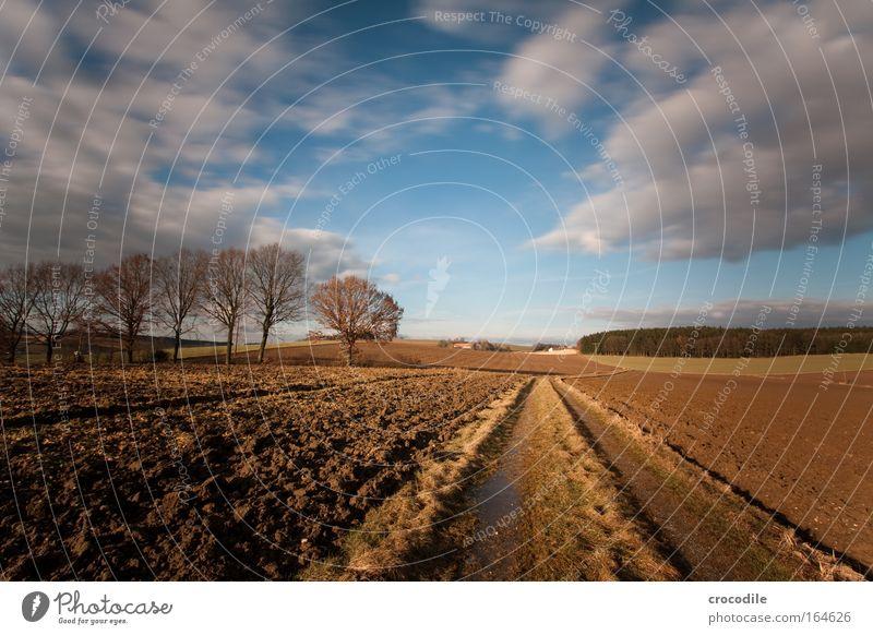 Sehnsucht II Himmel Natur Baum Pflanze Wolken Umwelt Landschaft Herbst Luft Horizont Erde Feld groß ästhetisch Hügel Grünpflanze