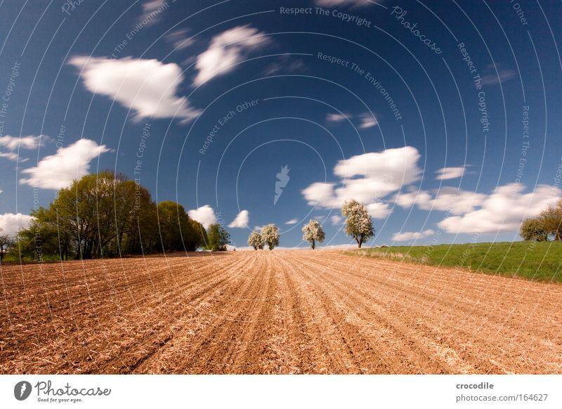 Weite Natur Himmel Baum Freude Wolken Ferne Erholung Frühling Freiheit Landschaft Zufriedenheit Feld Umwelt Erfolg Zeit Erde