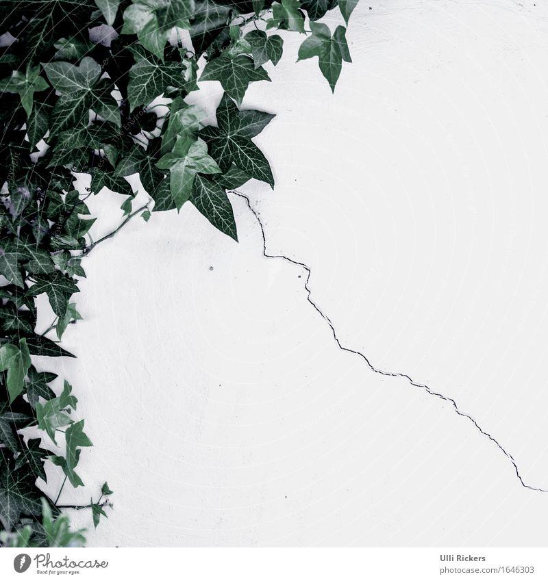 backyard charm Umwelt Pflanze Sträucher Efeu Grünpflanze Garten Park Haus Bauwerk Gebäude Architektur Mauer Wand Fassade Stein Beton Linie Blühend