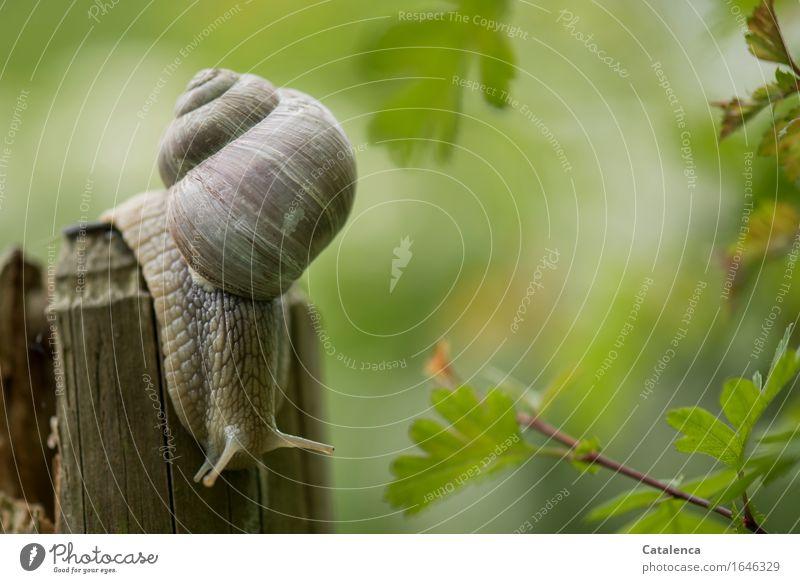 flauschig : grünflauschiges Licht Natur Tier Sommer Pflanze Weissdorn Garten Wiese Wildtier Schnecke 1 berühren Bewegung kalt braun Umwelt Umweltschutz