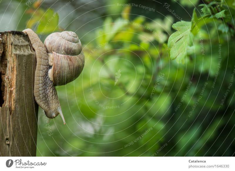 Auf den Weg Natur Pflanze grün Tier Frühling Bewegung Holz Garten grau braun Wildtier Geschwindigkeit Schnecke beweglich langsam schleimig