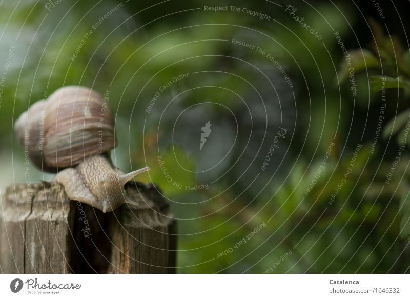 Aufbruch Natur Pflanze grün Tier Frühling Bewegung Holz Garten braun Wildtier Geschwindigkeit Schnecke schleimig gefräßig Zaunpfahl Weinbergschnecken