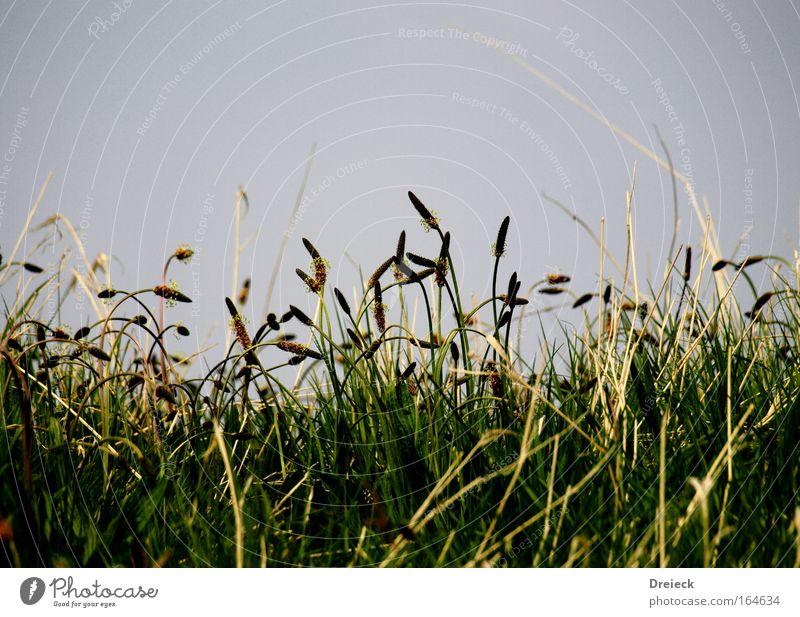 Halm(a) Natur grün blau Pflanze gelb Erholung Wiese Gras Frühling Park Umwelt Idylle Blühend Duft Grünpflanze