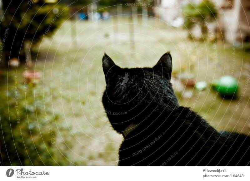 king of the backyard Farbfoto Außenaufnahme Menschenleer Tag Silhouette Starke Tiefenschärfe Blick nach hinten Wegsehen schwarzhaarig Haustier Katze 1 Tier