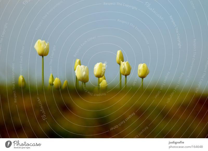 Wiese Außenaufnahme Menschenleer Textfreiraum oben Textfreiraum unten Froschperspektive Umwelt Natur Pflanze Himmel Wolkenloser Himmel Frühling Schönes Wetter