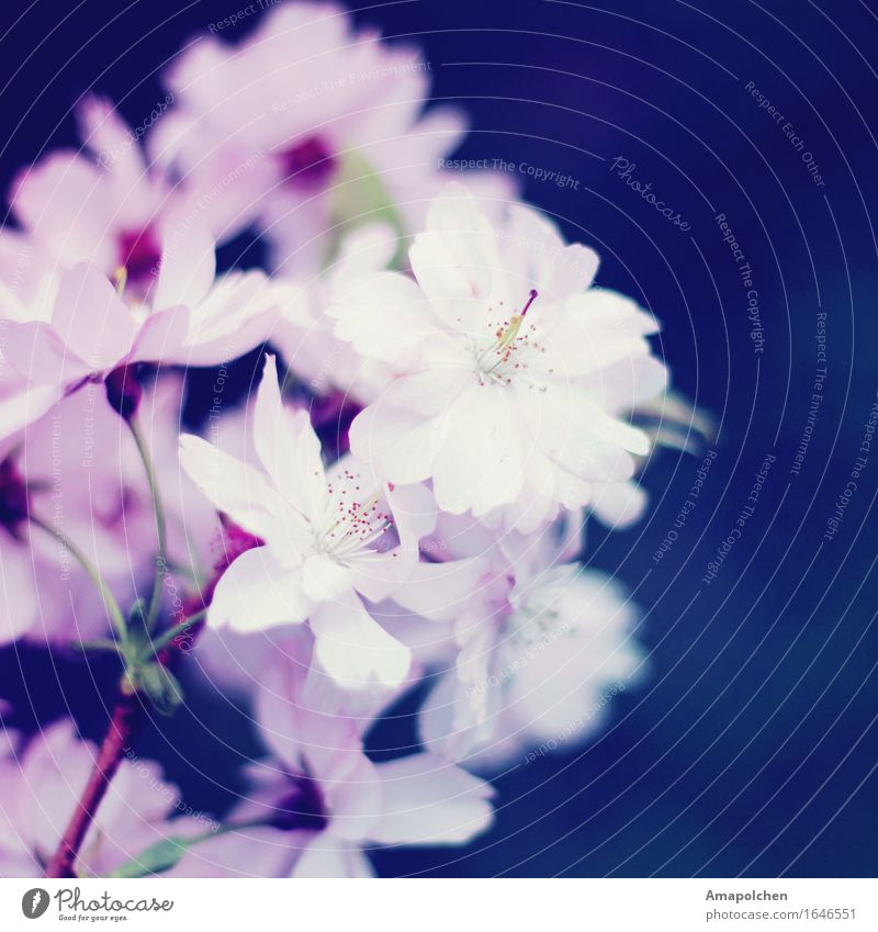 ::16-26:: Natur blau Pflanze Sommer Baum Landschaft Blume Erholung Tier Umwelt Liebe Blüte Frühling Religion & Glaube Glück Garten