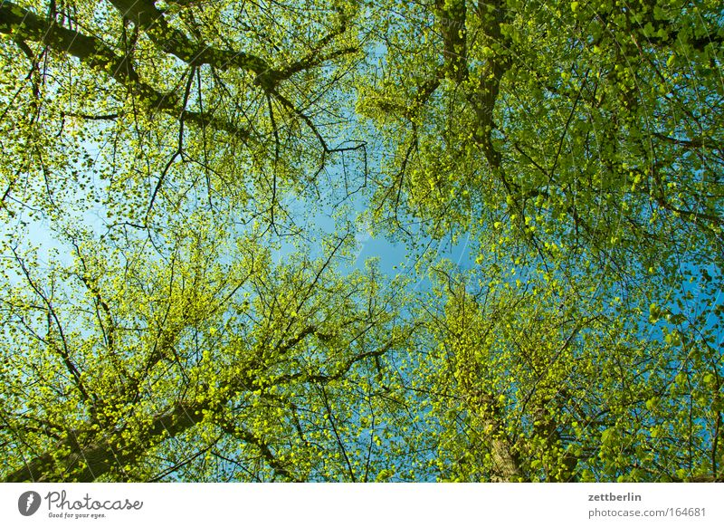 Frühling again Farbfoto Menschenleer Textfreiraum Froschperspektive Umwelt Natur Pflanze Himmel Schönes Wetter Baum Blatt Wald Freundlichkeit Fröhlichkeit Glück