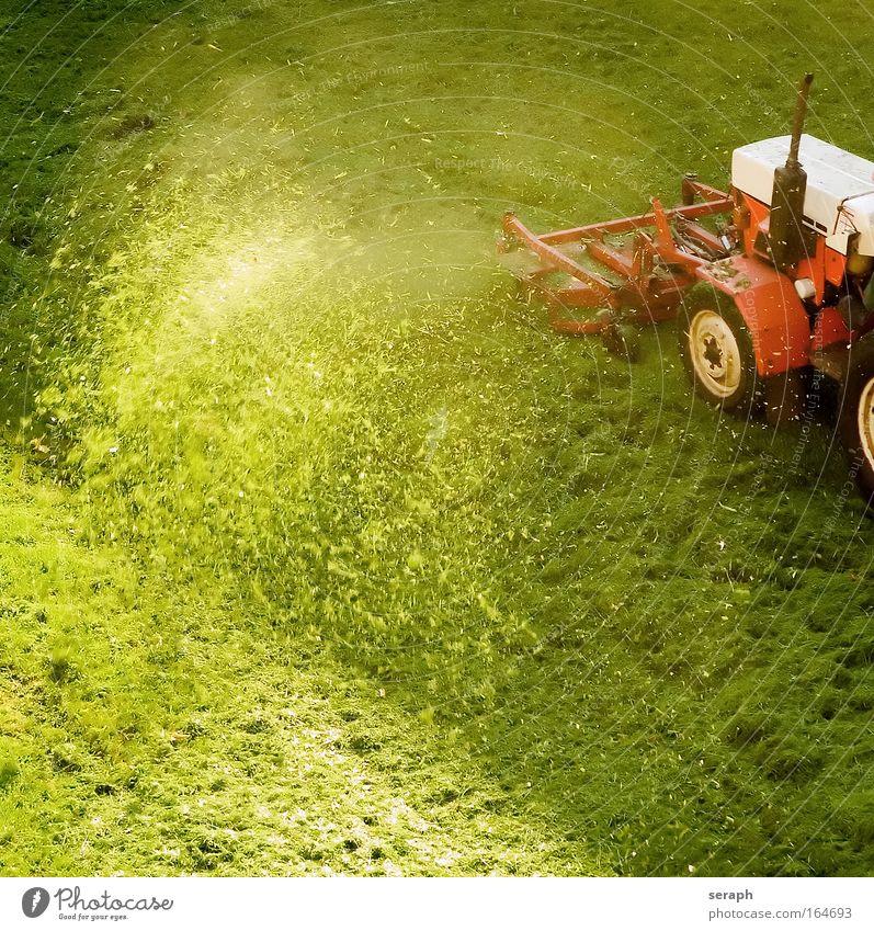 Grasfrisör Natur Landwirtschaft grün Landschaft Rasen Landwirtschaftliche Geräte Botanik Ackerbau Fahrzeug Gartenarbeit Traktor pflanzlich Hausmeister