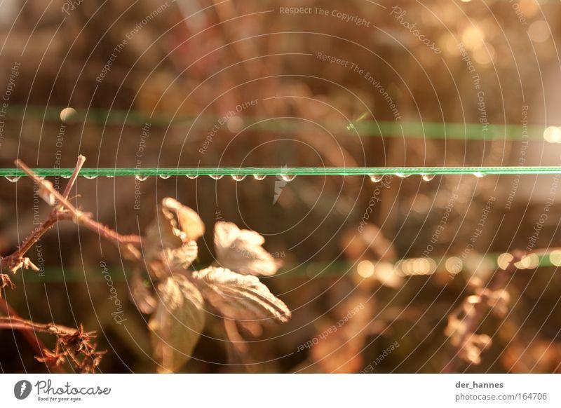 kullern Natur Wasser Pflanze Sommer gelb Herbst Glück Linie hell braun Umwelt Wassertropfen nass Trauer Sträucher Himbeeren