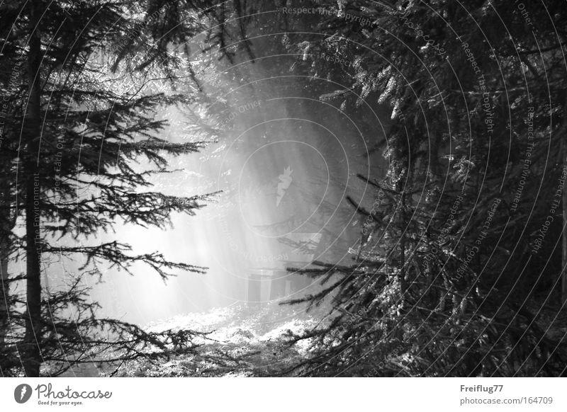 Lichtbank Natur weiß Baum Pflanze Sommer ruhig schwarz Erholung Gras träumen Wärme Zufriedenheit Stimmung ästhetisch Romantik Moos