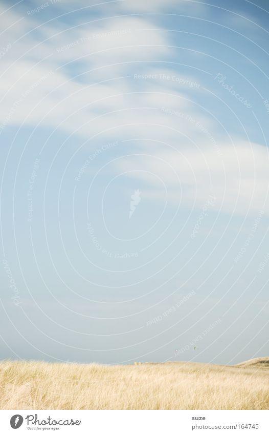 Freiraum Himmel Natur Ferien & Urlaub & Reisen Pflanze Sommer Strand Wolken Erholung Umwelt Landschaft Gras Freiheit Sand Luft hell Freizeit & Hobby