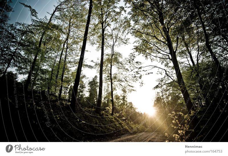 Zu den sieben Zwergen. Farbfoto Gedeckte Farben Außenaufnahme Menschenleer Abend Dämmerung Licht Schatten Kontrast Silhouette Lichterscheinung Sonnenlicht