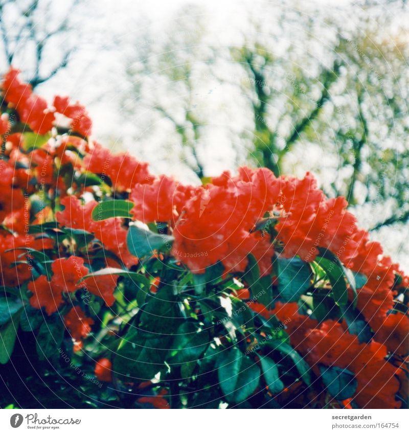 planten un blomen Farbfoto mehrfarbig Außenaufnahme Detailaufnahme Lomografie Holga Menschenleer Textfreiraum oben Morgen Tag Schatten Sonnenlicht Unschärfe
