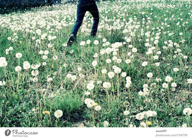 Sommer ist morgen wieder Natur Ferien & Urlaub & Reisen Wiese laufen rennen Kindheit entdecken Löwenzahn Blumenwiese Unbeschwertheit Kinderfreude