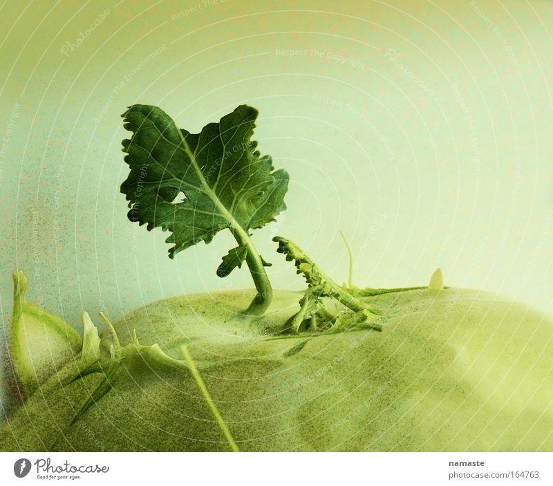 neues aus dem kohlrabiland... Natur Pflanze grün schön Landschaft Freude Umwelt gelb Gesundheit Lifestyle Horizont Park Häusliches Leben frisch Fröhlichkeit Ernährung