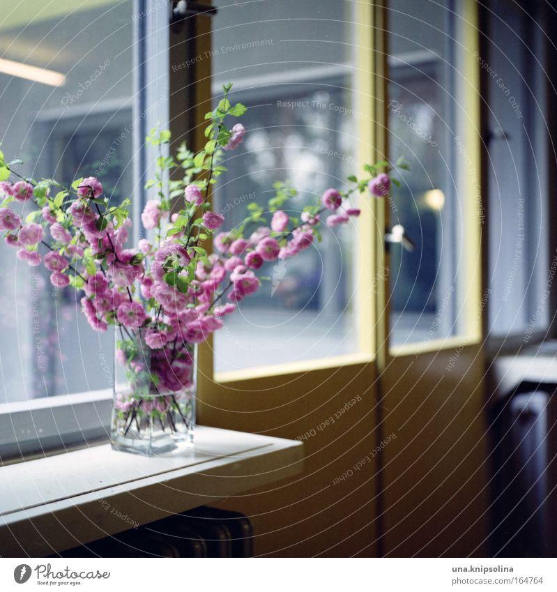 blütenzweige Pflanze ruhig Haus gelb Ferne Fenster Holz Gebäude Blüte Metall rosa Tür Fassade Wohnung Glas Häusliches Leben