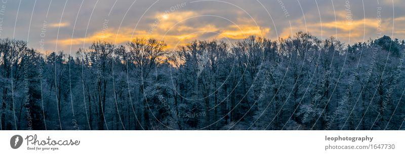 Winterpanorama Umwelt Natur Landschaft Himmel Wolken Sonne Sonnenlicht Wetter Schönes Wetter Eis Frost Schnee Schneefall Wald fantastisch kalt blau mehrfarbig