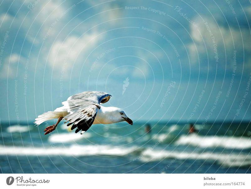 Wieder mal fliegen Natur Wasser Himmel Freude Strand Tier Stimmung Vogel Wellen Küste Wind Wetter frei Horizont Feder